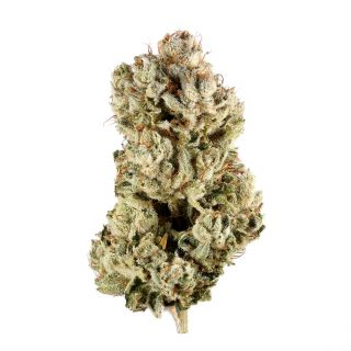 Buy Zookies Weed Strain UK