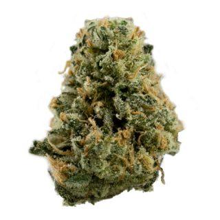 Buy Super Sour Diesel Cannabis Strain UK