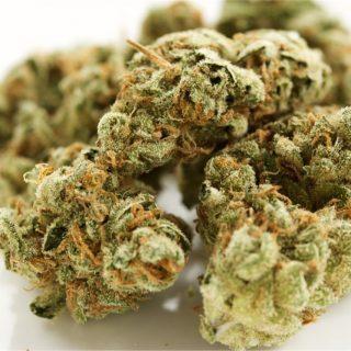Buy King's Bread Marijuana Strain UK