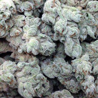 Buy Hash Passion Marijuana Strain UK
