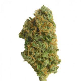 Holland Skunk Special Weed Strain UK